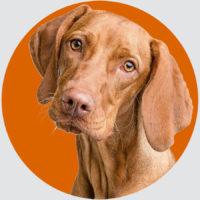 Pfotenchaoten_Hundetraining