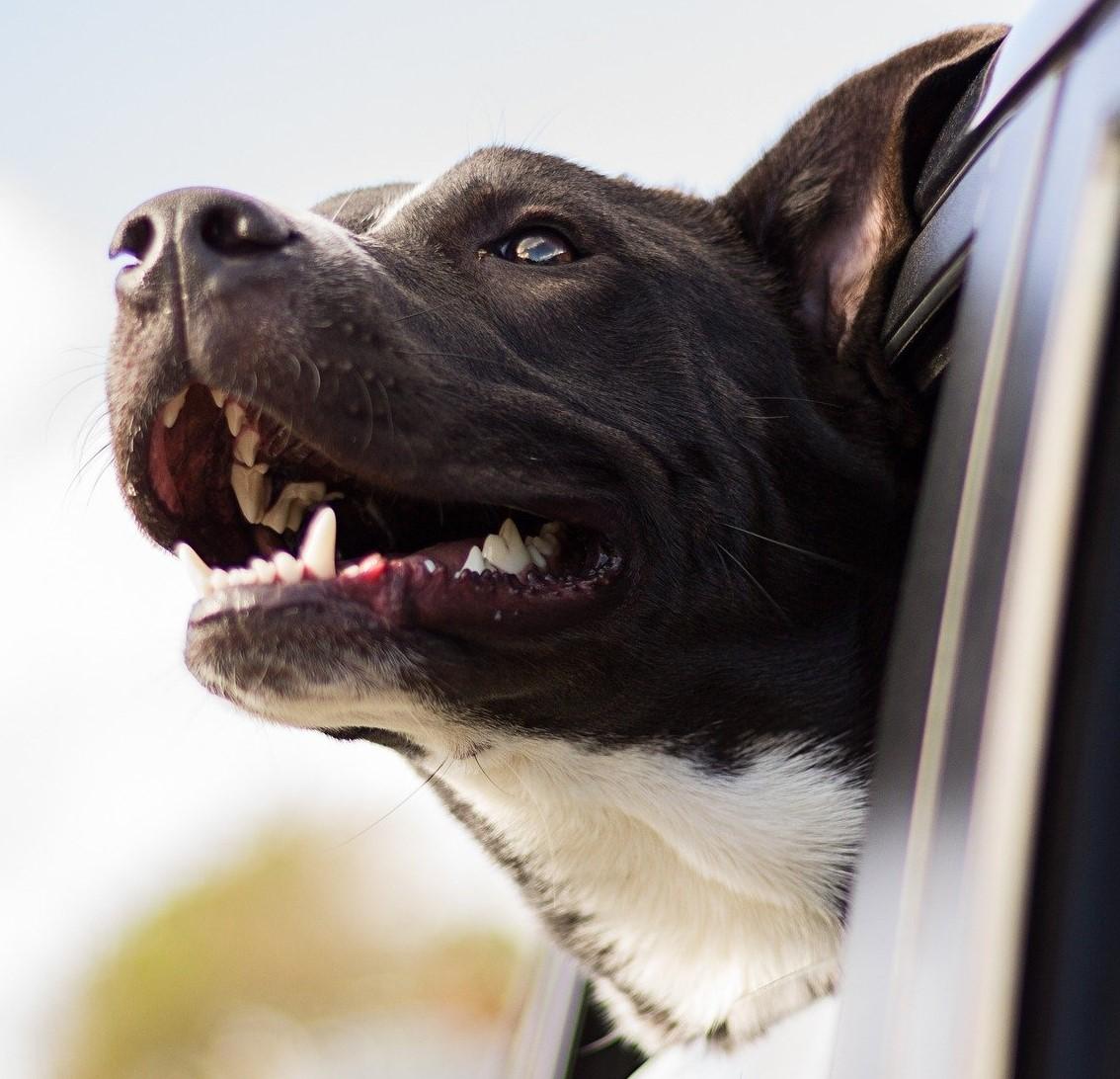 Hund_Einzelstunde